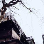 "Cherry Blossom Blizzard (""hanafubuki"" in Japanese)"