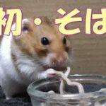Japanese  food 「Soba」