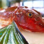 Japanese Street Food – SEA ROBIN FISH Sashimi Okinawa Seafood Japan