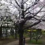 Japanese sightseeing, nice spots