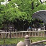 Nishi honganji (Kyoto Japan) 西本願寺(京都) Sightseeing in Japan. Japanese town.
