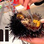Uni (Sea urchin) Japanese traditional food. most popular menus of sushi in Japan.