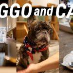 Dogs in Japanese Cafes 和カフェと看板犬