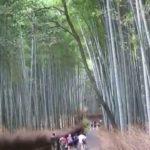 Japan Trip – September 2014 – Tokyo & Kyoto Sightseeing