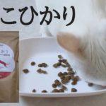 「ねこひかり」キャットフード実食レビュー(Japanese Cat Food NEKO HIKARI Review)【猫にっこり】