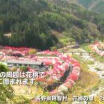 信州観光 長野県阿智村花桃の里 Japanese sightseeing( NAGANO-pref  Achi village)