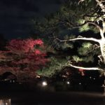 【Tokyo Sightseeing#8】Japanese Garden Walk#2/Colored Leaves in Rikugi-en Garden, Tokyo/六義園