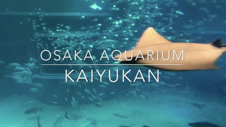 Aquarium Kaiyukan Osaka Japan Sightseeing Guide