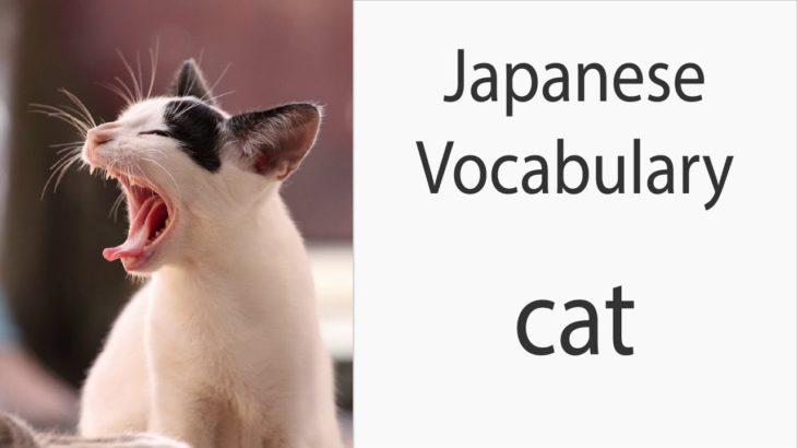 Japanese Vocabulary [Animals] Cat