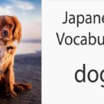 Japanese Vocabulary [Animals] Dog