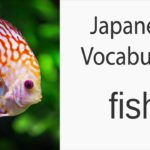 Japanese Vocabulary [Animals] Fish