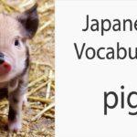 Japanese Vocabulary [Animals] Pig