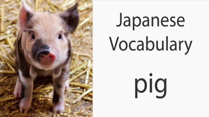 Japanese Vocabulary [Animals] Pig