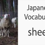 Japanese Vocabulary [Animals] Sheep