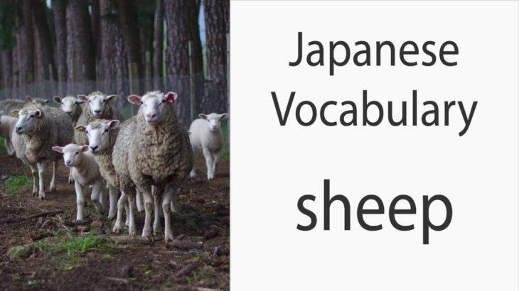 Japanese Vocabulary [Animals] Sheep