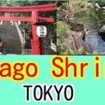 "Sightseeing spot of Tokyo(JAPAN) ""Atago shrine"" / 愛宕神社(東京)の出世の石段を登り参拝。"