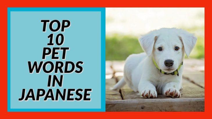 Top 10 Pet Words in Japanese! Beginner Conversation Series Easy2LearnJapanese