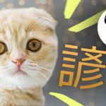 CAT PROVERBS || Learn Japanese Cat & Dog Phrases