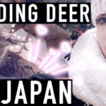 DAY IN NARA JAPAN VLOG | Deer park, Japanese Food and Sightseeing!