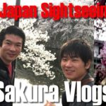 Junpei's Cherry Blossom Adventure Vlogs | Sightseeing in Hikone, Shiga, Kansai, Japan