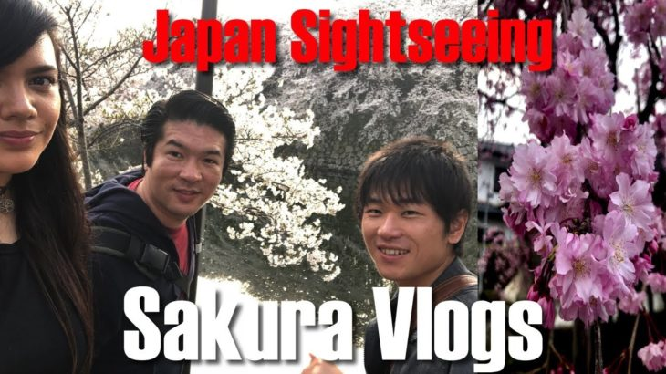 Junpei's Cherry Blossom Adventure Vlogs | Sightseeing in Hikone, Shiga, Kansai, Japan