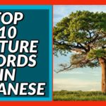 Top 10 Nature Words in Japanese! Beginner Conversation Series