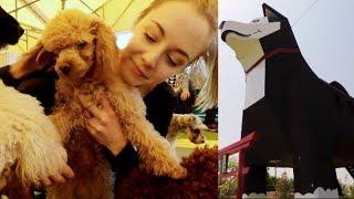 Japan's doggo theme park! So many puppies!