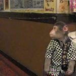 Kayabuki Tavern, Japan (Monkey Izakaya)