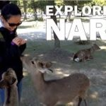 Things to Do in Nara : Day Trip Travel Guide