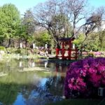 Japanese culture in Latino American_ラテンアメリカ系アメリカ人の日本文化