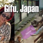 Sightseeing in Japan: Gifu Japan Squirrel Village | Starbucks Library | Delicious Japanese Food