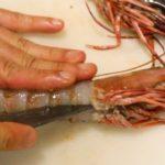 GIANT TIGER SHRIMP with Chili Sauce – Japanese Street Food – Okinawa Japan