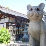 Japan's Cat Culture
