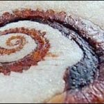 """Eating Japanese food Senbei """"Tako senbei"""" (ASMR) Octopus"""