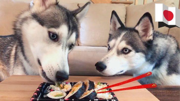 Huskies Trying Japanese Food | International Food Taste Test #2