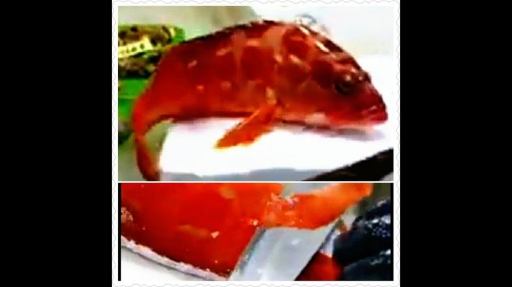 Japanese Food – 赤い巨人 (GIANT RED) Mackerel Flounder Sushi Teruzushi Japan