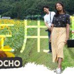Kansai vlog with my Japanese friend | SAYOCHO sunflowers, food and stays