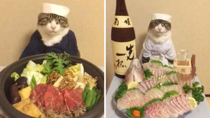 Kitties Eat Japanese Food