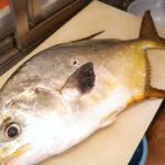 BONG GIANT GOLDEN POMFRET FISH SASHIMI.JAPANESE STREET FOOD.FOOD COLLECTOR.