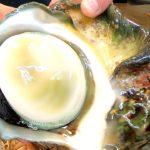 GIANT SEA SNAIL Sashimi Seafood – Japanese Street Food