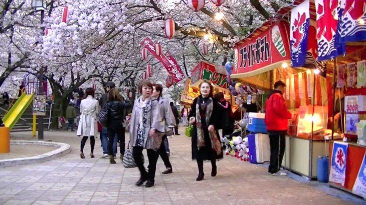 JAPAN CULTURE – Popular Activities 花見   HD