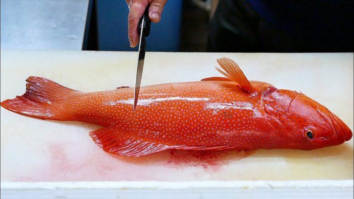 Japanese Food – RED GROUPER Steamed Fish Sashimi Okinawa Seafood Japan