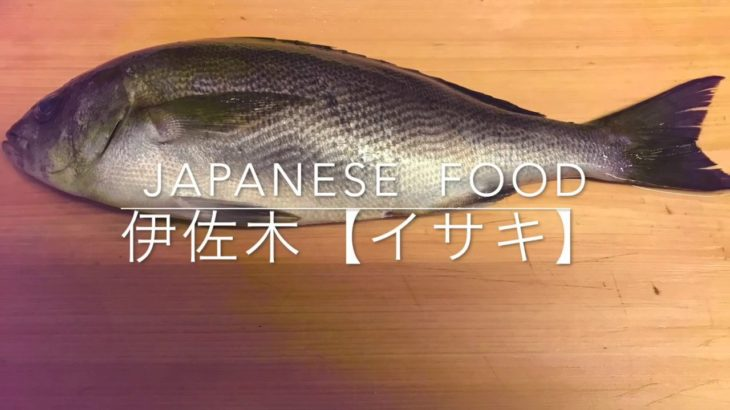 ふっくら伊佐木【イサキ】おろし方 イサキのたたき  japanese  food  washoku
