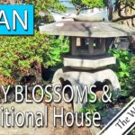JAPAN: 1,600 Cherry Blossoms and Historic Japanese House Tour | TRAVEL VLOG #0143