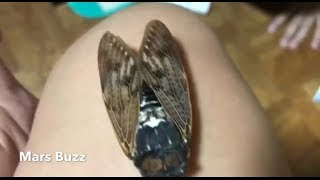 Part 1 Life in Japan | Japanese SUMMER symbol | Cicada | Unvail Japanese Culture
