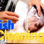 【fish dishes the sea bream】Japanese high-end fish/Making traditional Japanese food