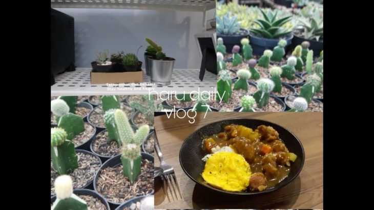 vlog 7: weekend= bought succulent and cactus, and eating Japanese food.