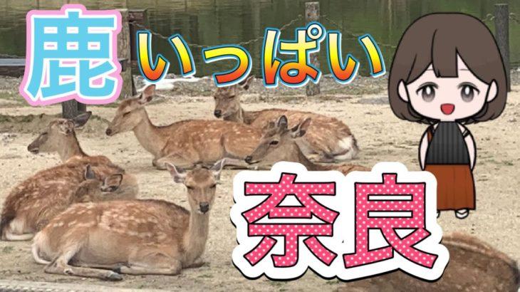 """鹿の国""""奈良""""の観光ガイド/the sightseeing Nara Japan"""