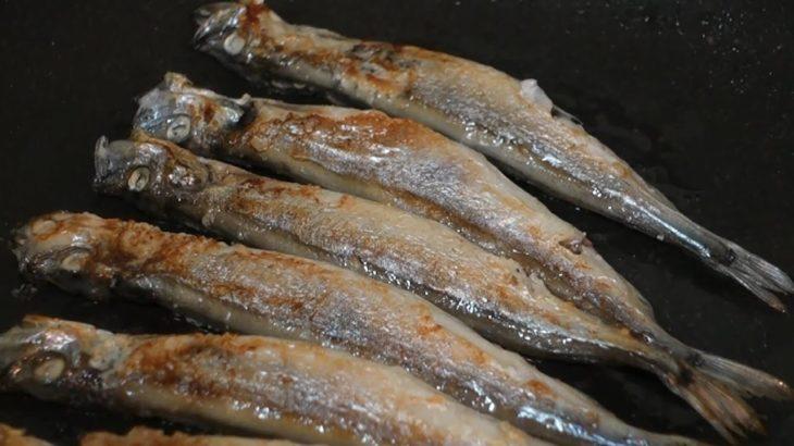 ASMR Shishamo smelt grilled – Japanese food