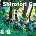 【Japan Travel】Shirotori Garden in Nagoya Aichi Japan Sightseeing Spot 白鳥庭園 愛知県 名古屋 日本庭園